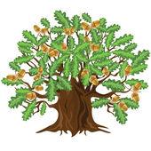 Oak tree with acorns, vector illustration — Stock Vector