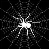 Spider on a web — Stock Vector