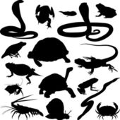 Reptiles and amphibians — Stock Vector