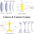 Stock Vector: Convex & Concave Lenses