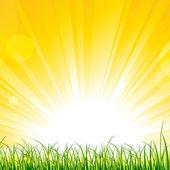 Grass on the Sunshine Rays — Stock Vector