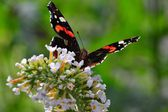 Butterfly with flowers — Stock Photo
