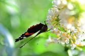 Butterfluy ii — Zdjęcie stockowe