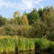 Swamp in Russia - Stock Photo