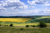 Fields and meadows in the Voronezh region, Russia — Stock Photo