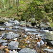 River in mountain forest — Stock Photo #12184082