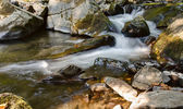 Creek in the forest — Stockfoto