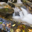 Autumn creek in forest mountain - Stock Photo