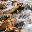 River in autumn — Stock Photo #13848541