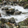 Autumn in river — Stock Photo
