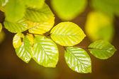 Folhas de outono — Fotografia Stock