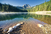 Beautiful morning on the mountain lake surrounded by forest — Stock Photo
