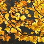 Herbstliche Wald mit Lichtern — Stockfoto