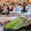 Stream Autumn — Stockfoto