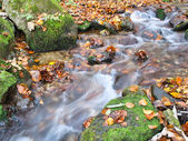 Stream in autumn — Stock Photo