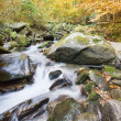 Mountain river in autumn forest — Stock fotografie