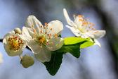Fruit flower — Stock Photo