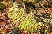 Autumn nature — Stock Photo