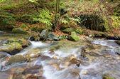 Flusso in autunno — Foto Stock