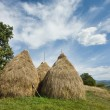 Landscape with haystacks - Stock Photo