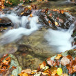 Beautiful the river in mountain forest — Stock Photo #15718473