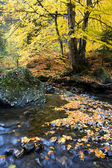 Beautiful the river in mountain forest — Stock Photo