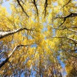 Colorful autumn trees in forest — Stock Photo