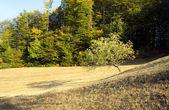 Vista del paisaje — Foto de Stock