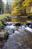Beautiful stream in mountain the forest — Stock Photo