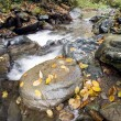 The creek in autumn — Stock Photo