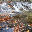 The creek in autumn — Stock Photo #19785305