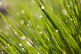 Drops of dew on grass — Stock Photo
