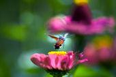 Flowers, spring — Stockfoto