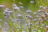 Flowers, spring — Stock fotografie