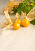 Physalis fruit closeup — Stock Photo