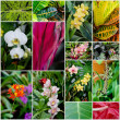 Collage of tropical flowers and plants - Stock Photo