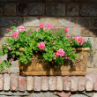 Flowers in  terracotta box — Stock Photo