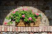 Flores en caja de terracota — Foto de Stock