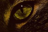 Cat Eye 013 — Stock Photo