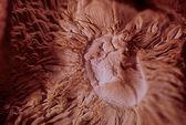 Shitake Mushroom 062 — Stock Photo