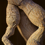 ������, ������: Cactus Trunk 065