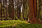 Redwood Forest 0118 — Stock Photo