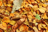 Autumn leaves fall on the ground — Stock Photo