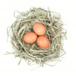 Eggs in the nest - Lizenzfreies Foto