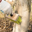 Treatment of trees from pests — Stock Photo #24445979
