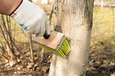 Treatment of trees from pests — Stock Photo