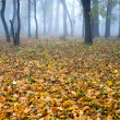 Autumn forest in the mist — Stock Photo #24616771