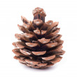 Stock Photo: Pine cones isolated on white background