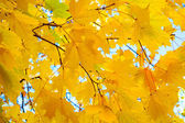 Autumn leaves against the sky — Stock Photo
