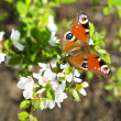 Butterfly on a branch — Stock Photo #25091567